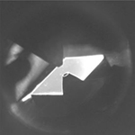 Camera image of a sample in a NAP cell